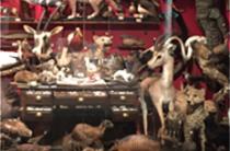 Treasures of Biodiversity